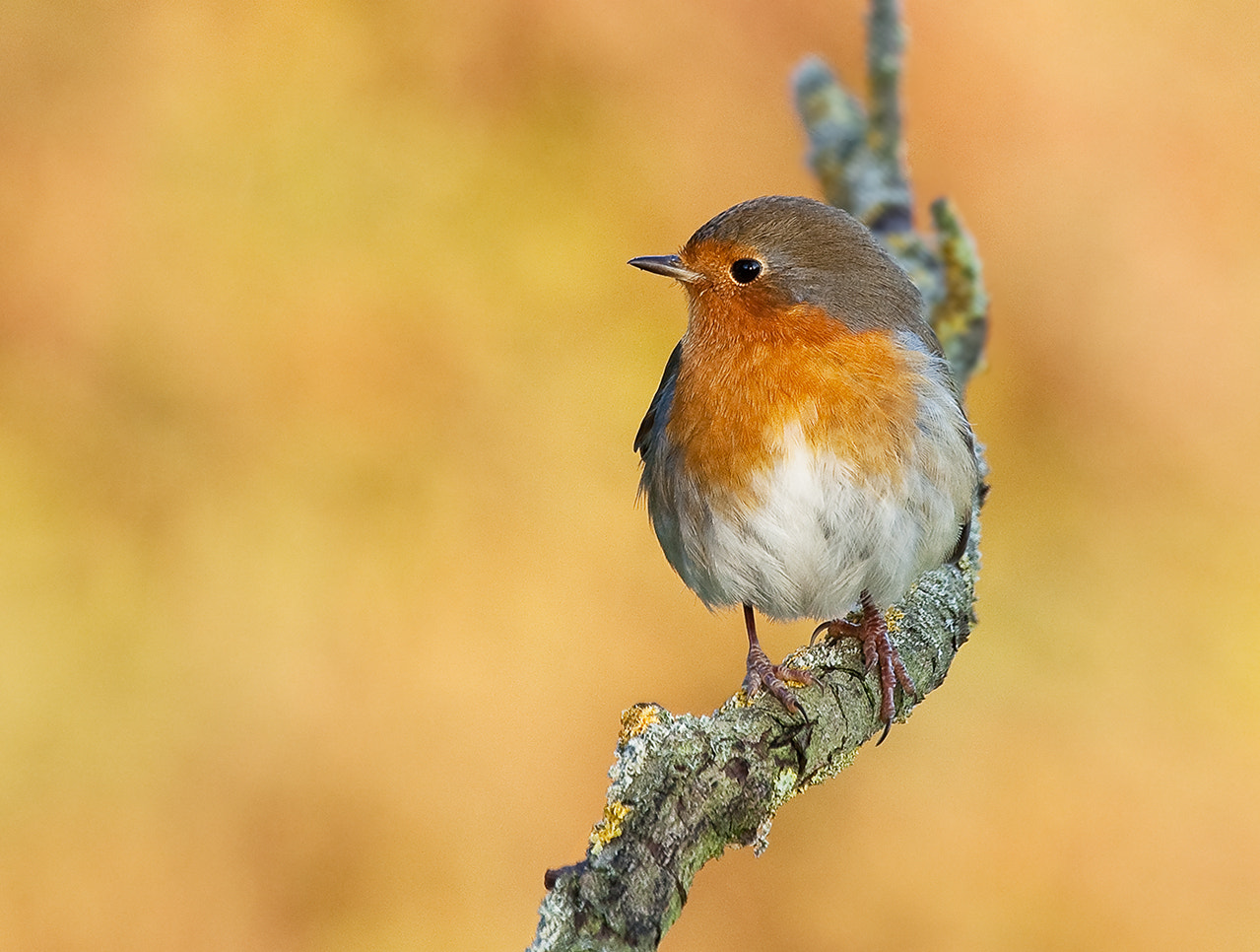 Photograph sunny robin by Phil Horton on 500px