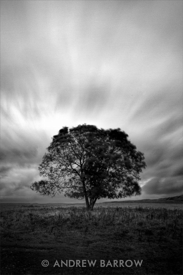 Photograph Lone Tree by Andrew Barrow ARPS on 500px