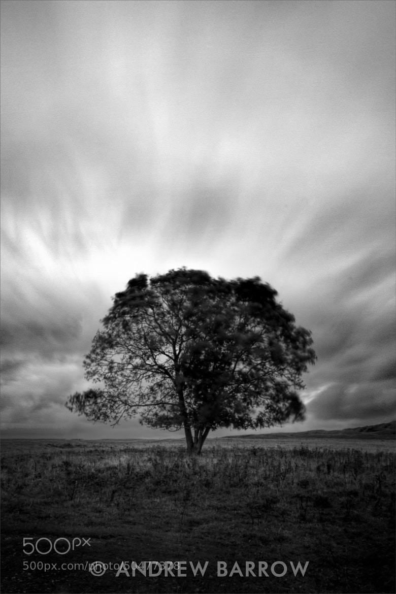 Photograph Lone Tree by Andrew Barrow LRPS on 500px