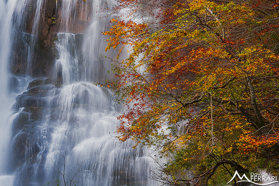 Photograph Falling Colors by Davide Ferrari on 500px
