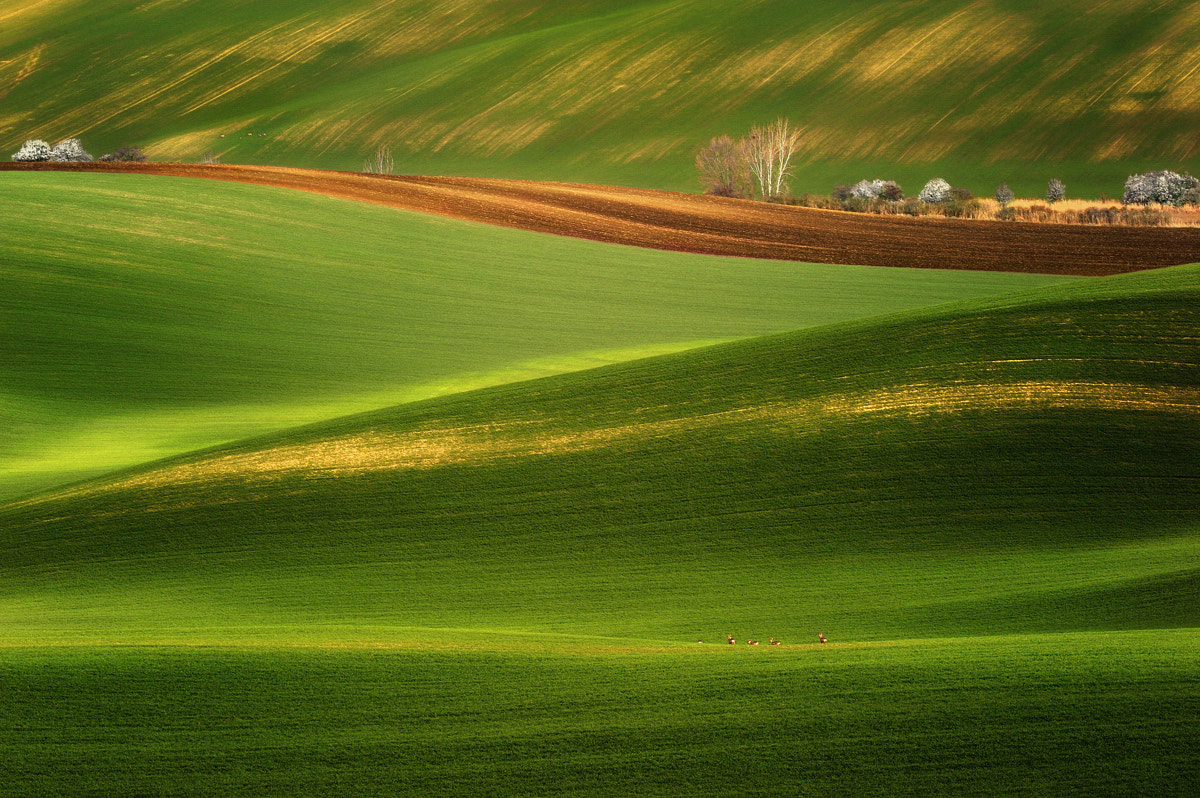 Photograph In The Springtime... by Pawel Kucharski on 500px