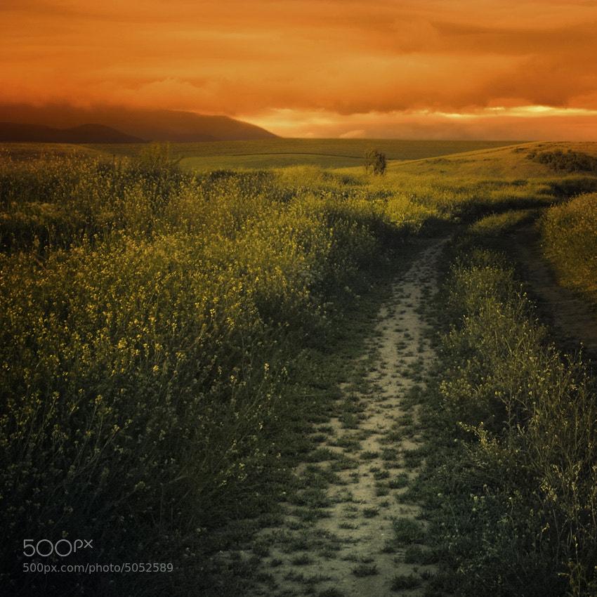 Photograph My green mile by Silvia Georgieva on 500px