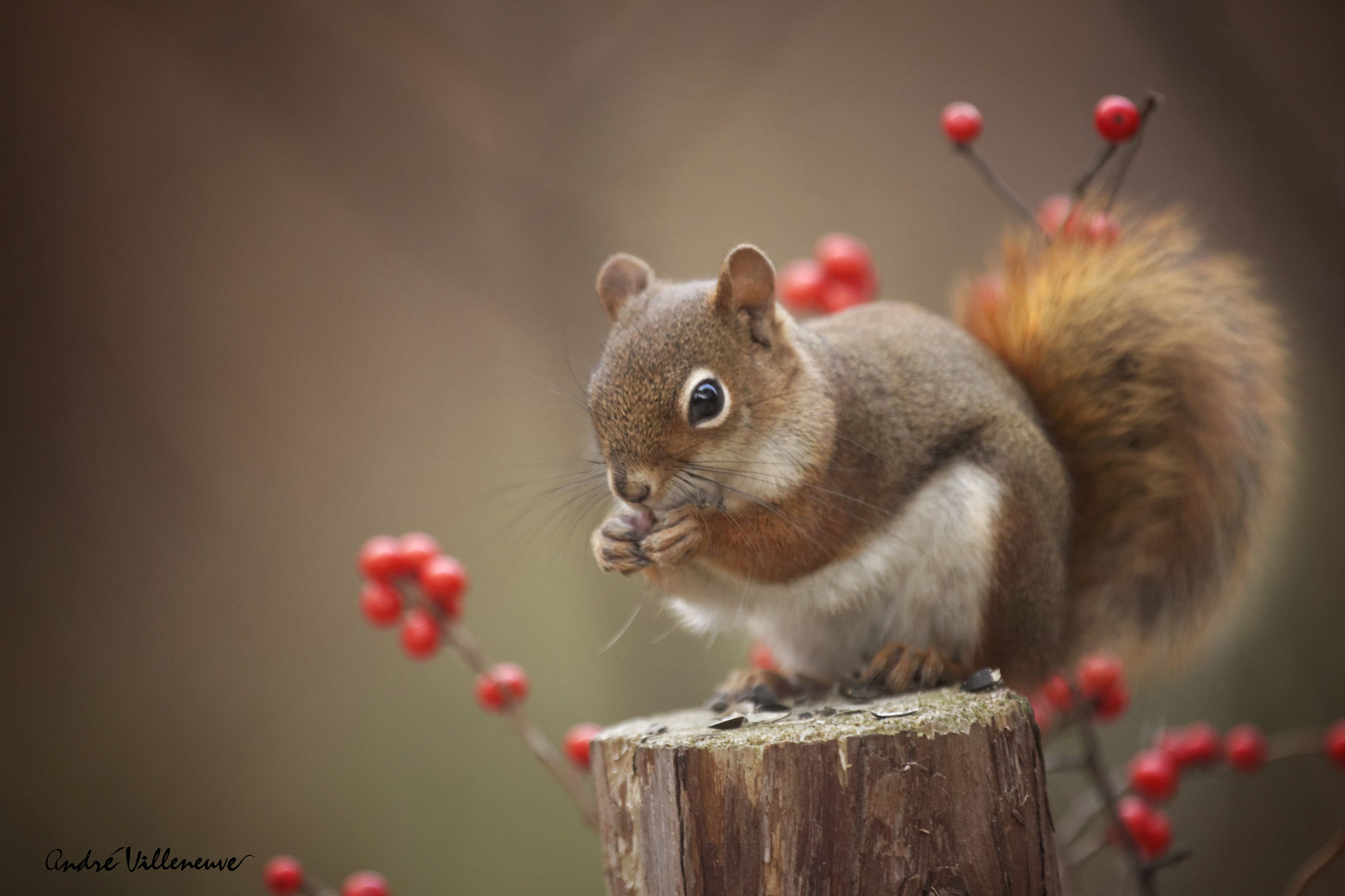Photograph The red before the white by Andre Villeneuve on 500px