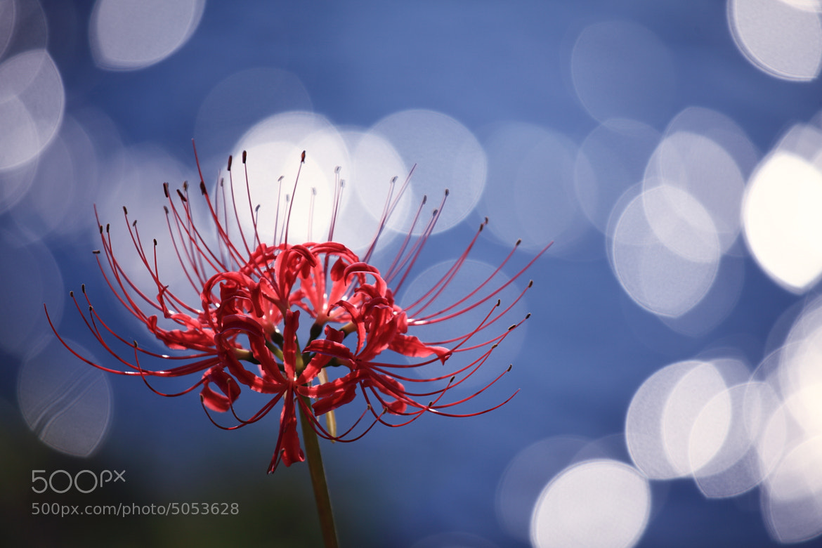 Photograph flowery by Noriko Tabuchi on 500px