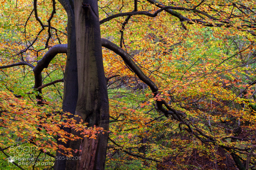 Photograph Padley Gorge, Peak District by Simon Byrne on 500px