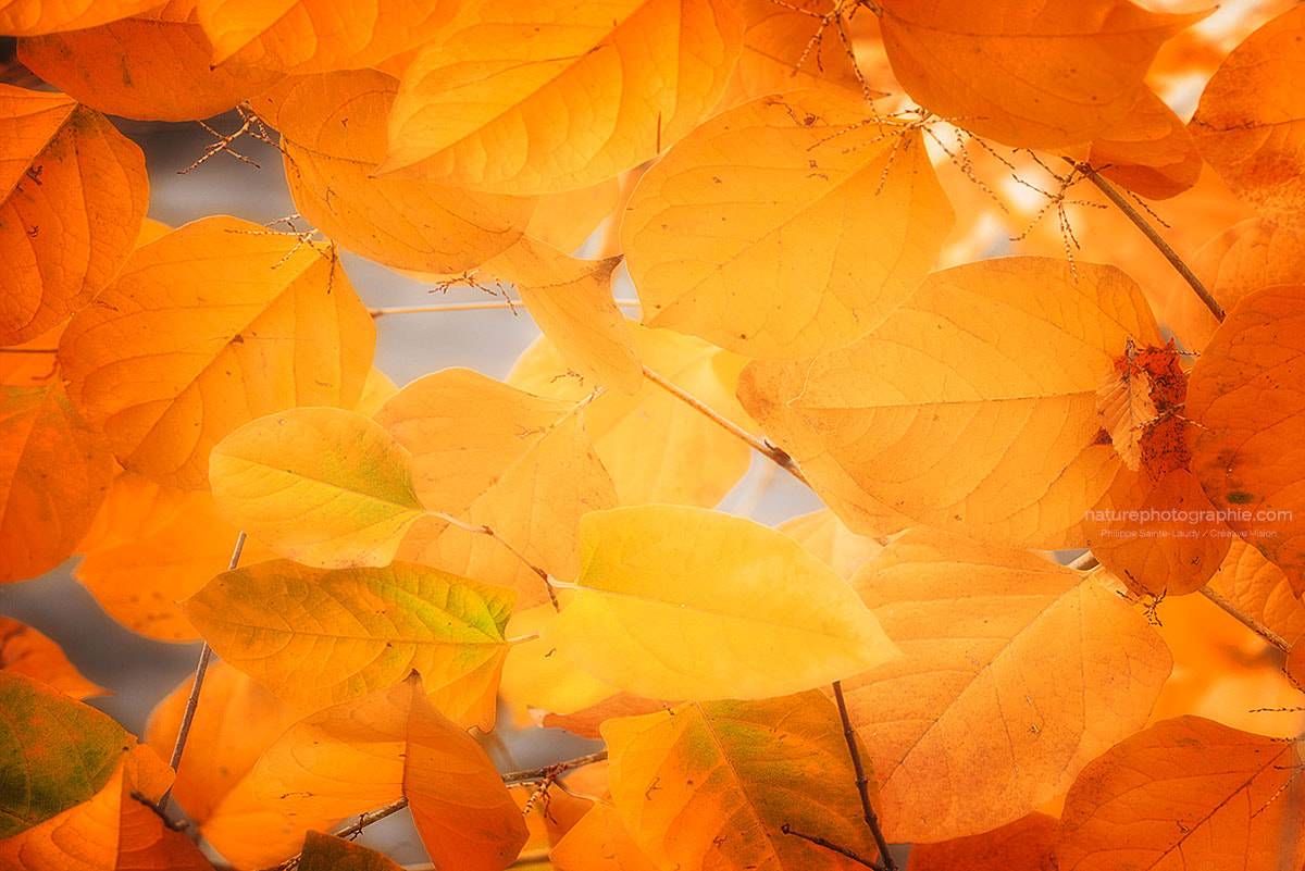 Photograph Seasonal leaves by Philippe Sainte-Laudy on 500px