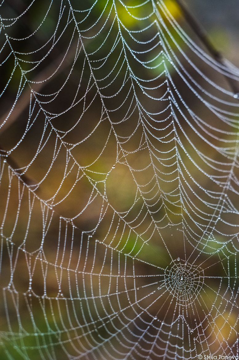 Photograph Wet web by Stela Taneva on 500px