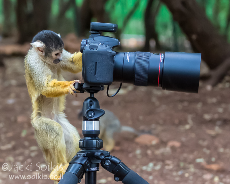 Photograph Monkey Business by Jacki Soikis on 500px