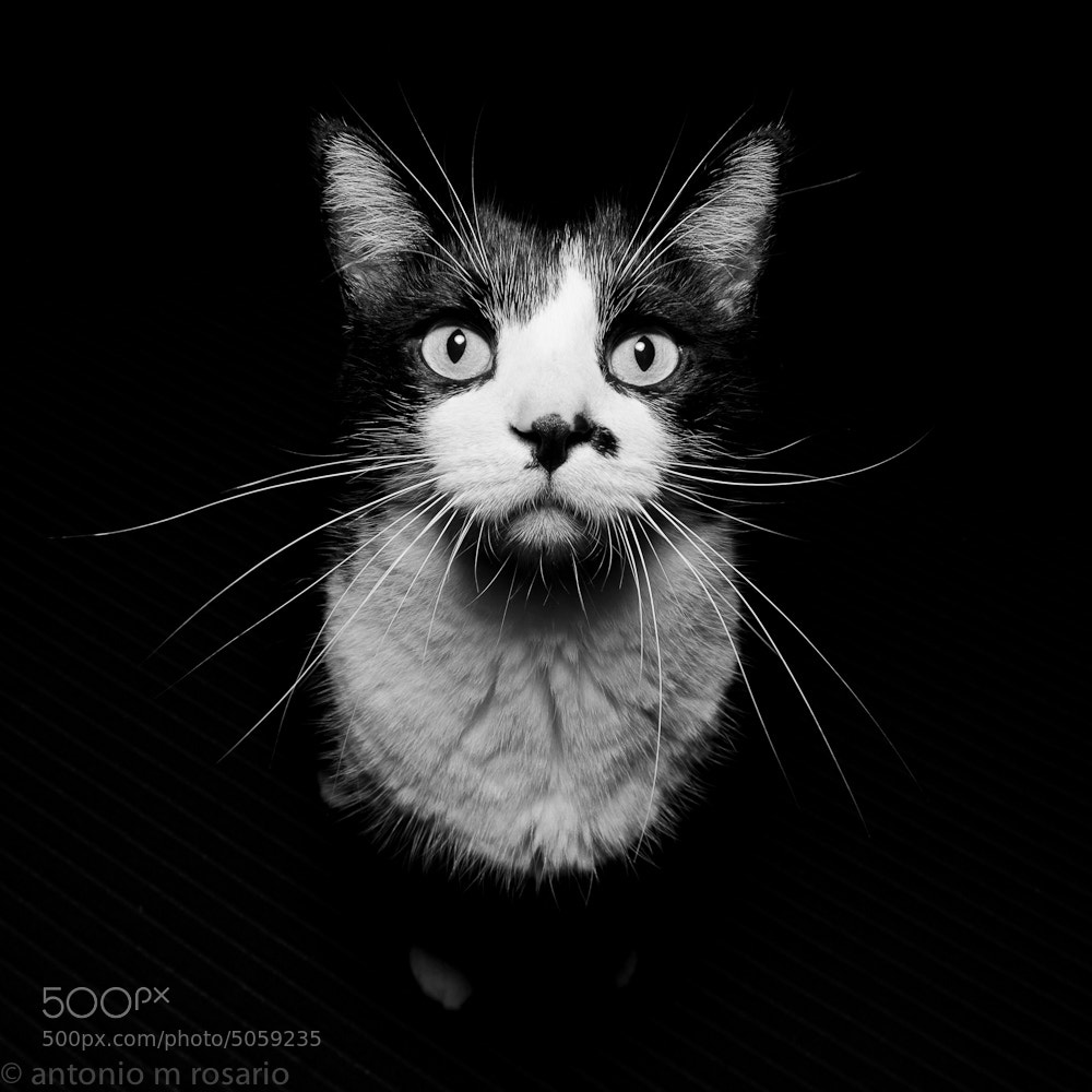 Photograph Hank by Antonio M. Rosario on 500px