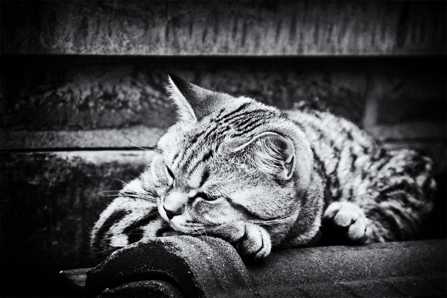 Photograph Siesta by Andrea Jancova on 500px