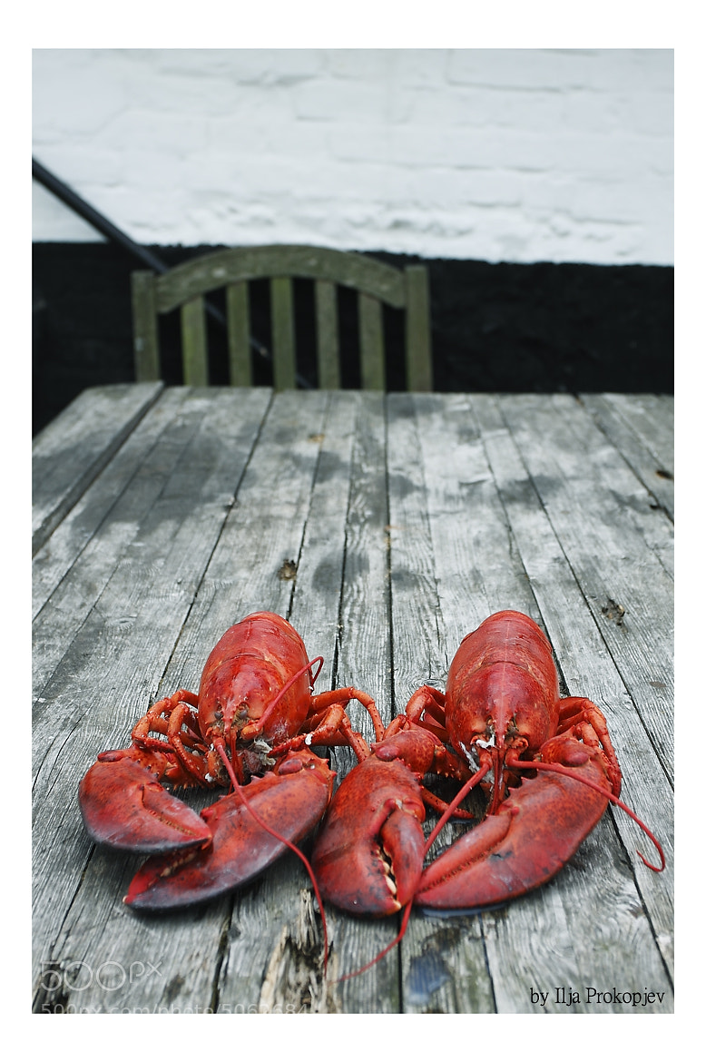Photograph Lobsters by Ilja Prokopjev on 500px