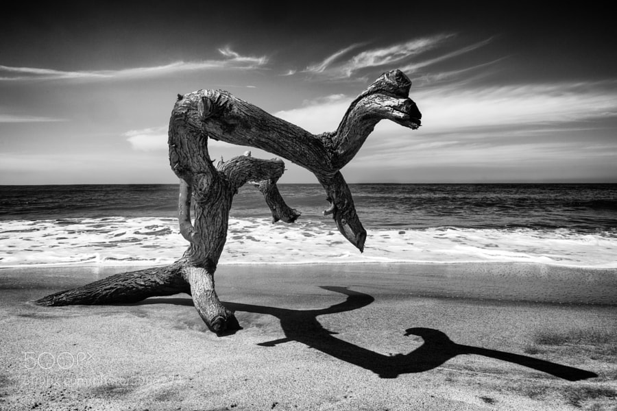 Beach Trunk by carlos restrepo (carlosrestrepo)) on 500px.com