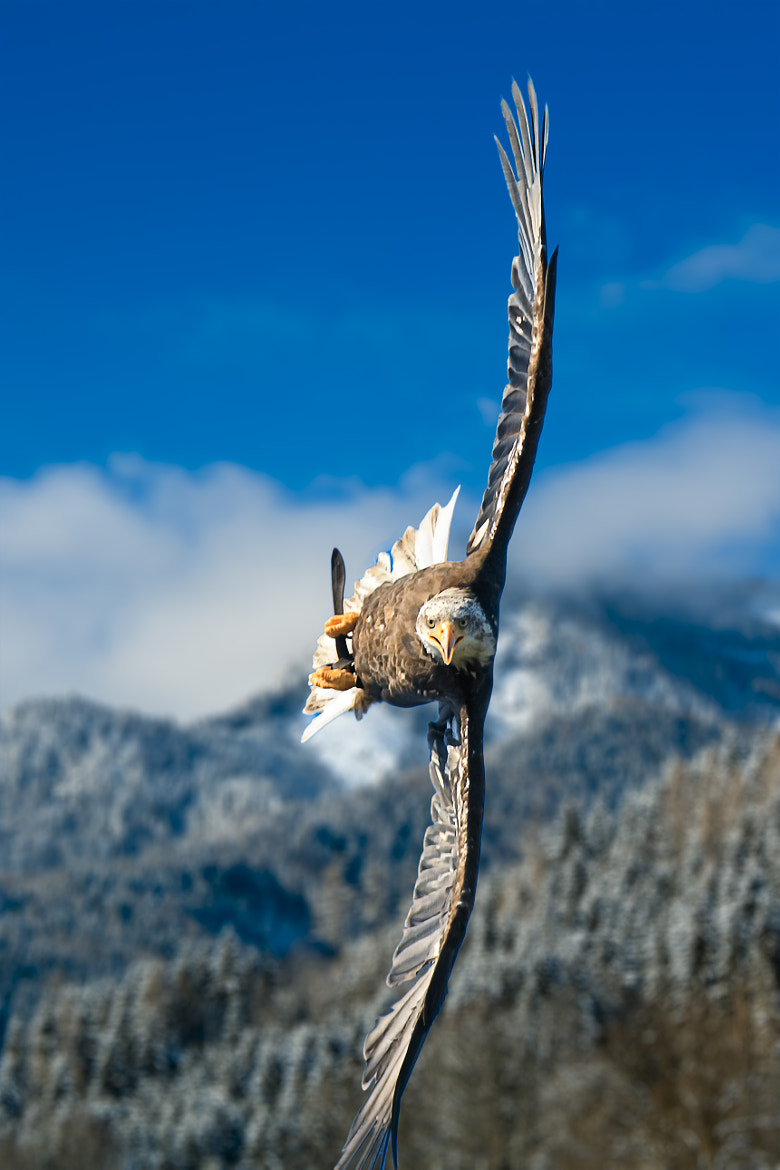 Photograph Crosswind by Sitzwohl Bernhard on 500px
