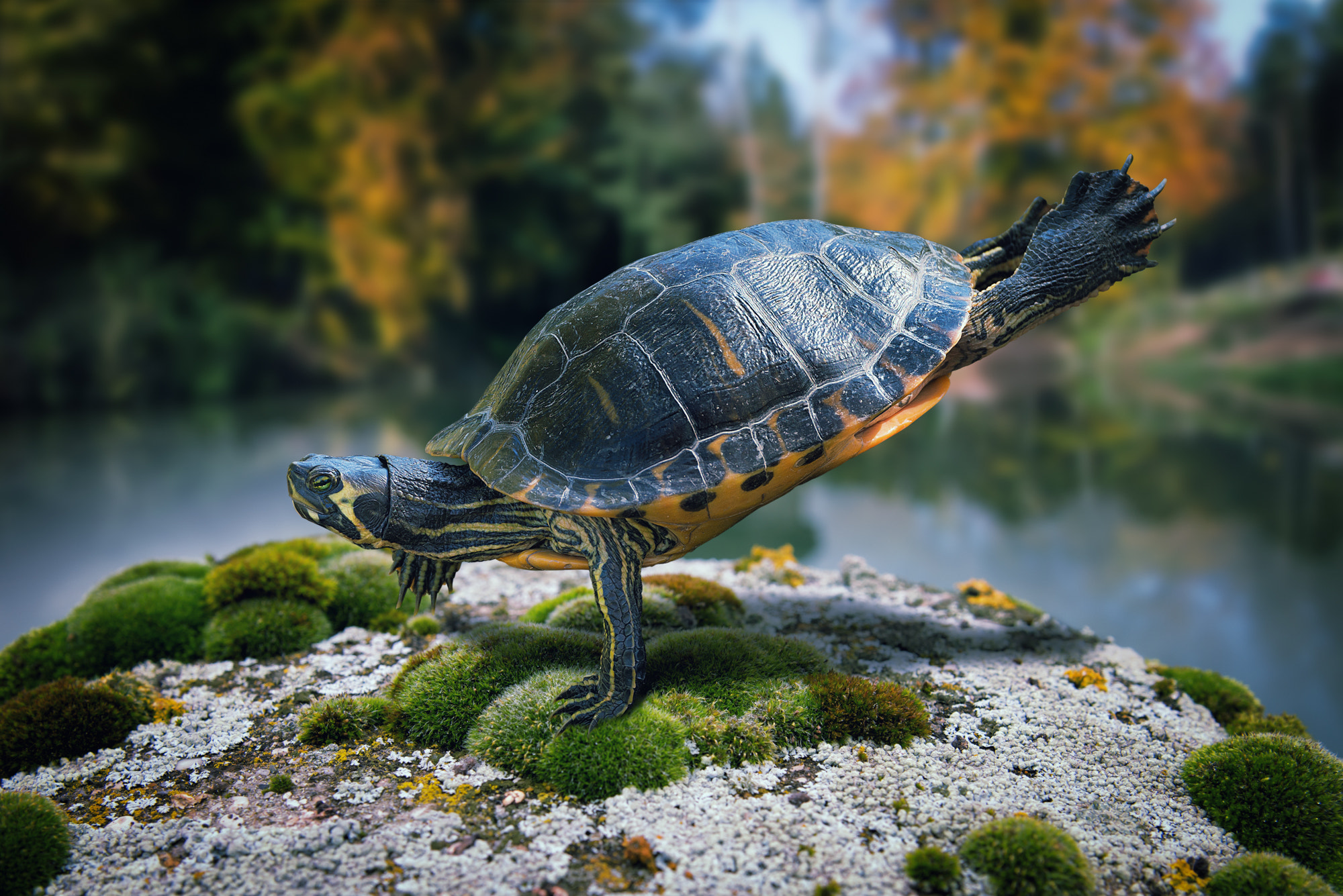 Photograph Just an exercising ninja turtle by John Wilhelm is a photoholic on 500px