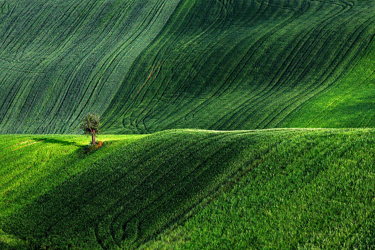 Photograph green spring by ivo pandoli on 500px