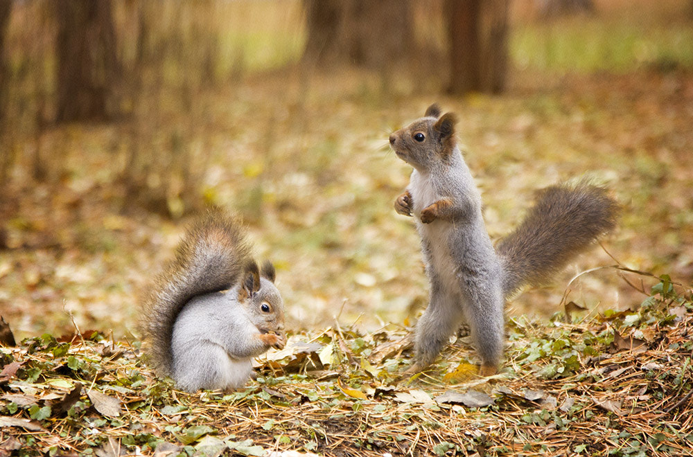 Photograph Squirrels again by PolTergejst  on 500px