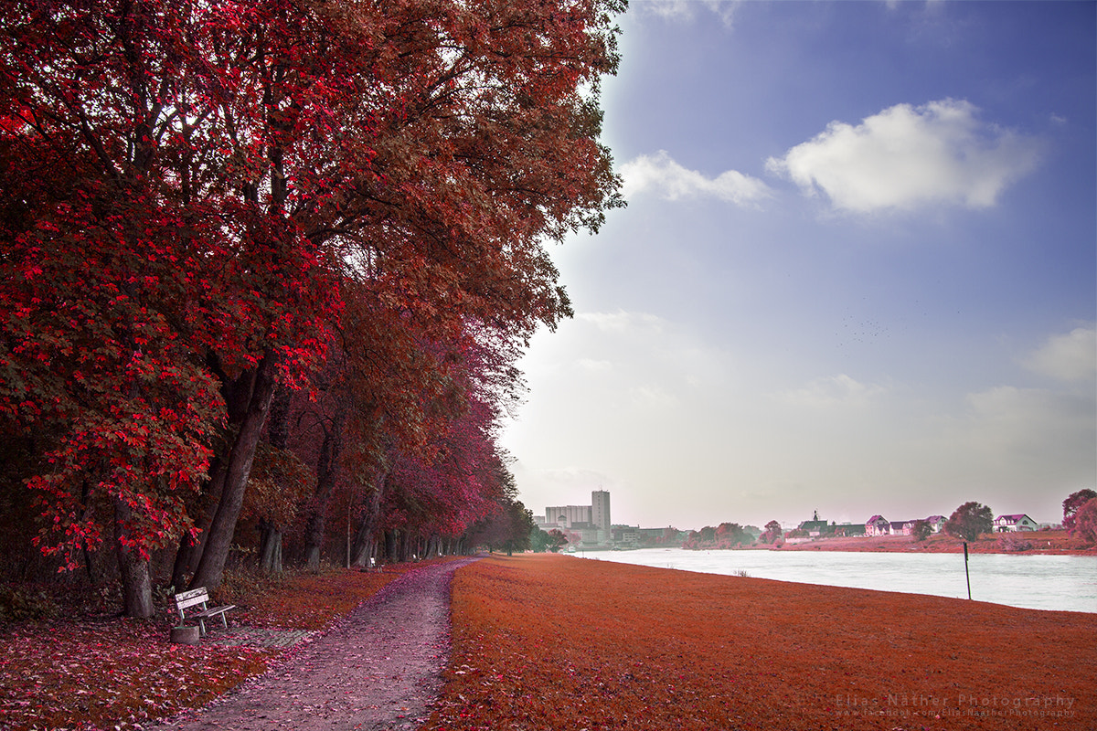 Photograph City Park Riesa in Red by Elias Näther on 500px
