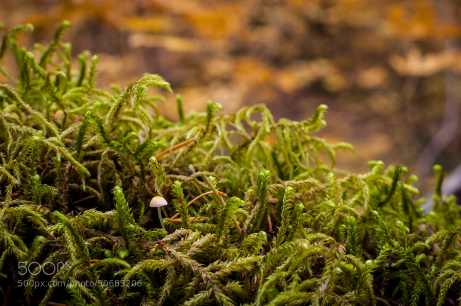 Photograph Mushroom and Moss by Jeff Carlson on 500px
