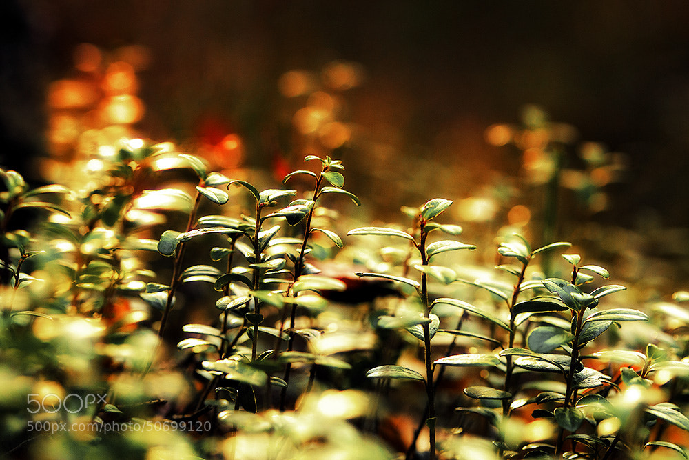 Photograph light up by Dgs  on 500px