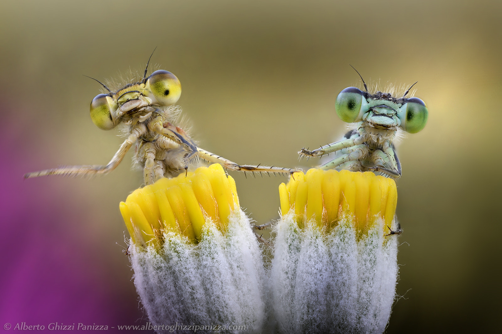 Photograph We just wanna play drums! by Alberto Ghizzi Panizza on 500px