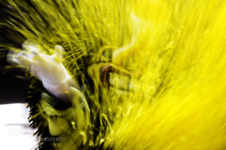 Photograph Confetti splash by Amadis B. on 500px
