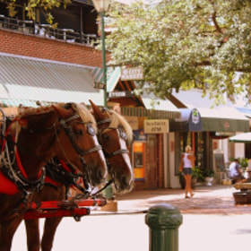 A Day in Savannah by KW Lanning (kwlanning) on 500px.com