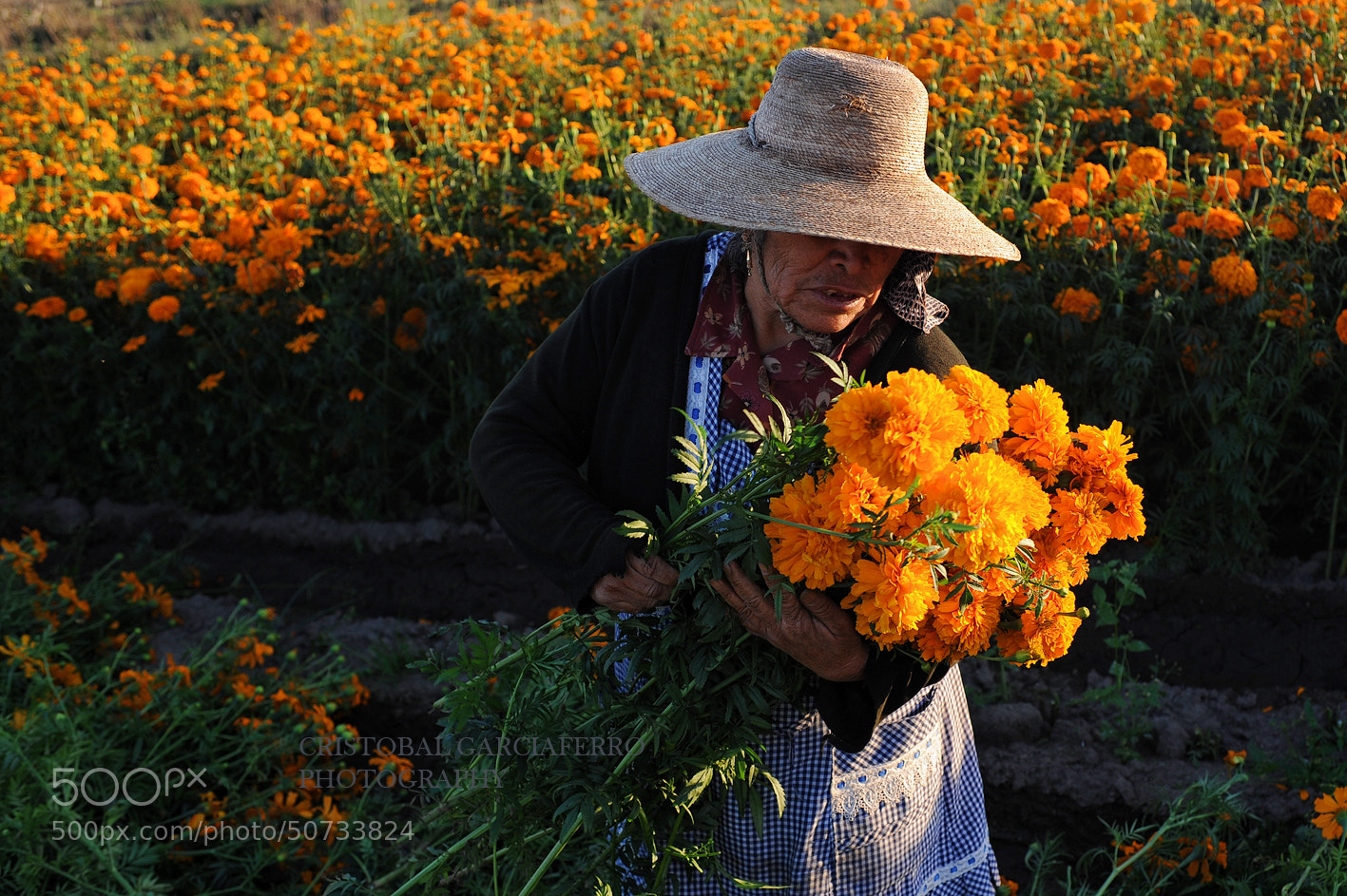 Photograph Flowers collector by Cristobal Garciaferro Rubio on 500px