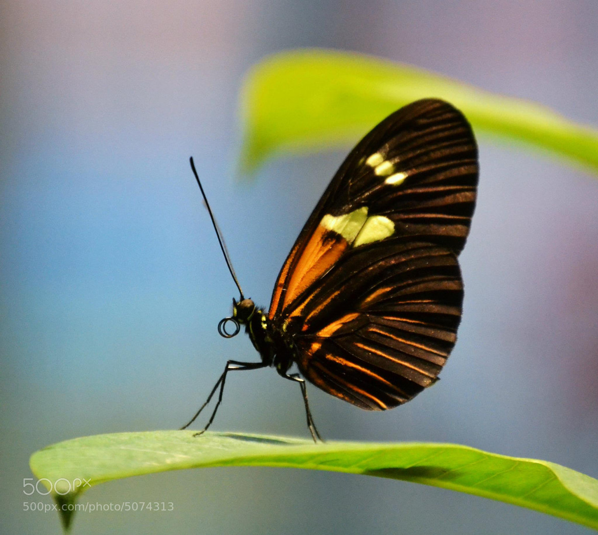 Photograph Alien with Wings by Michael Fitzsimmons on 500px