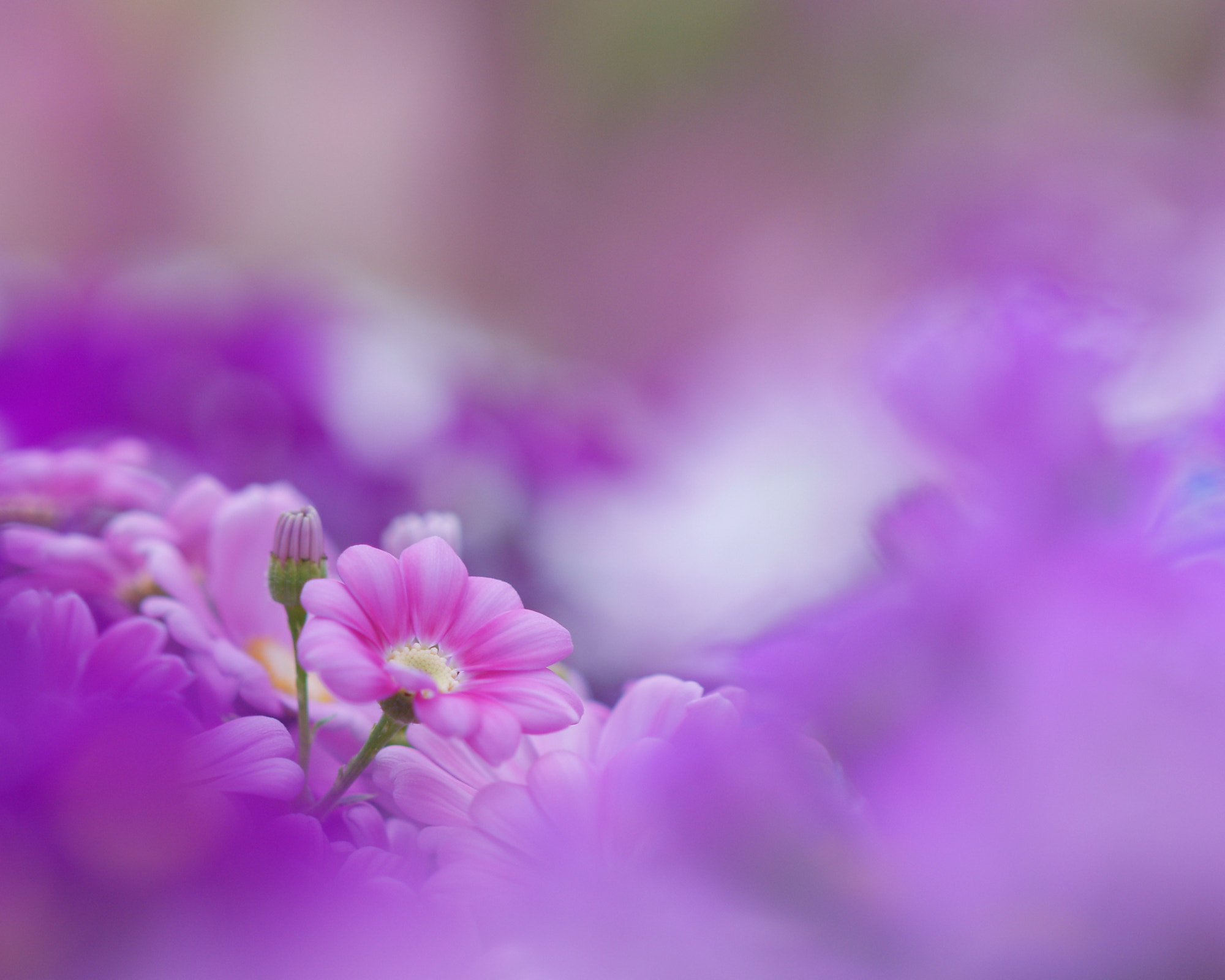 Photograph Lovely colers by Noriko Tabuchi on 500px