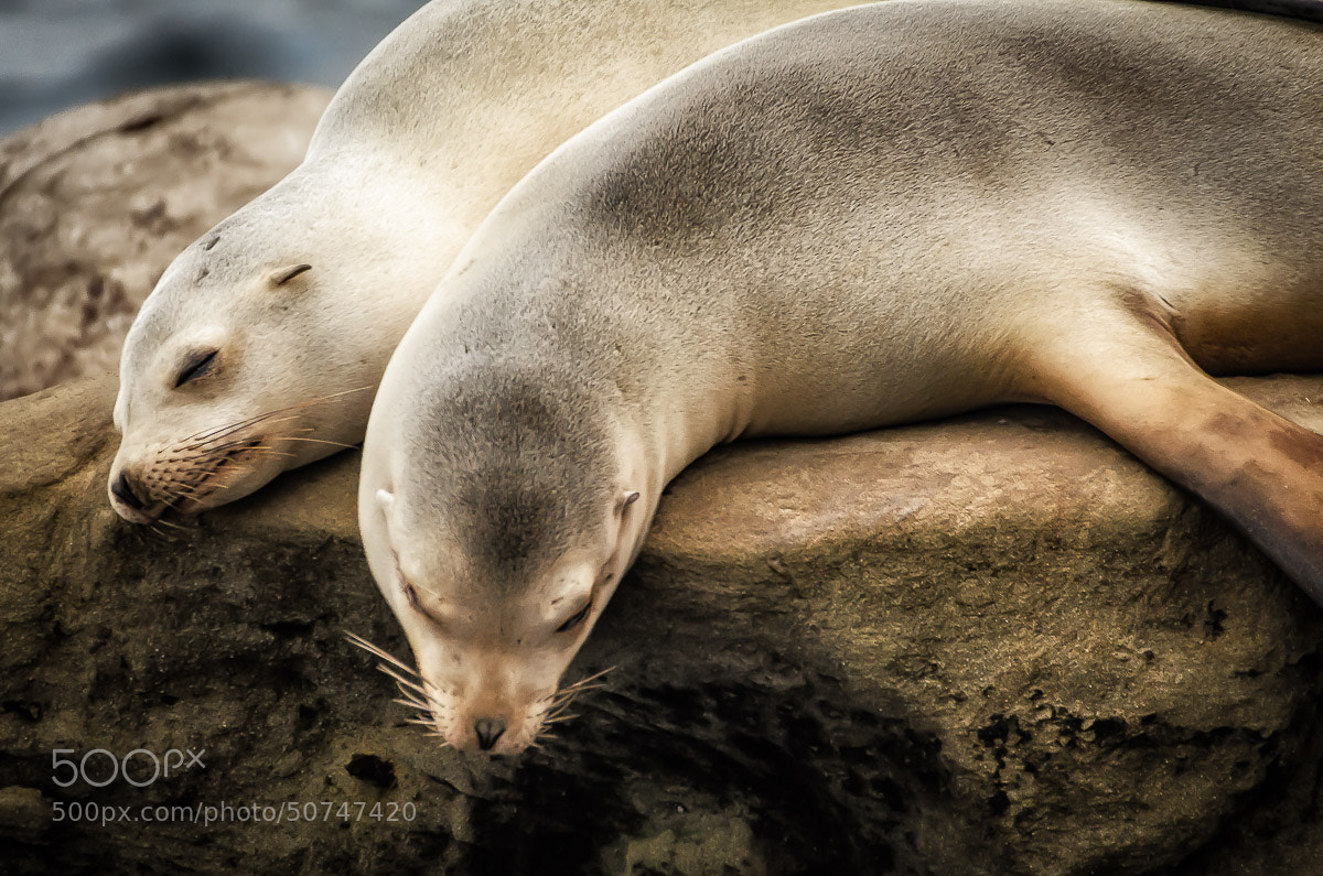 Photograph Seal pups by Jim Wells on 500px