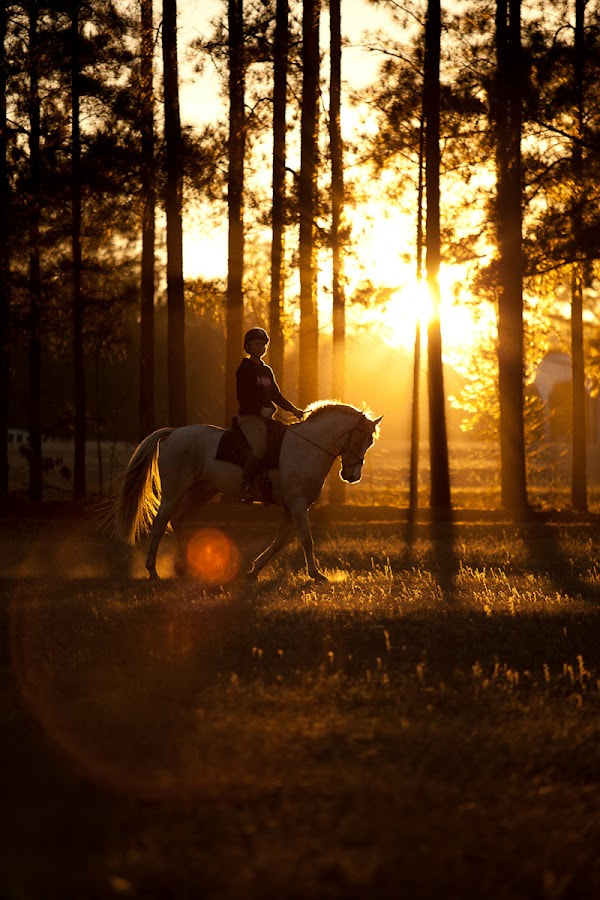 Photograph Eventing by Steven C. Bloom on 500px