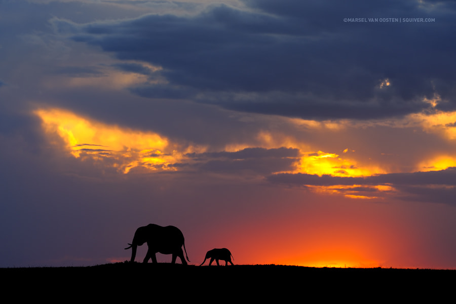 Father and son by Marsel van Oosten on 500px.com