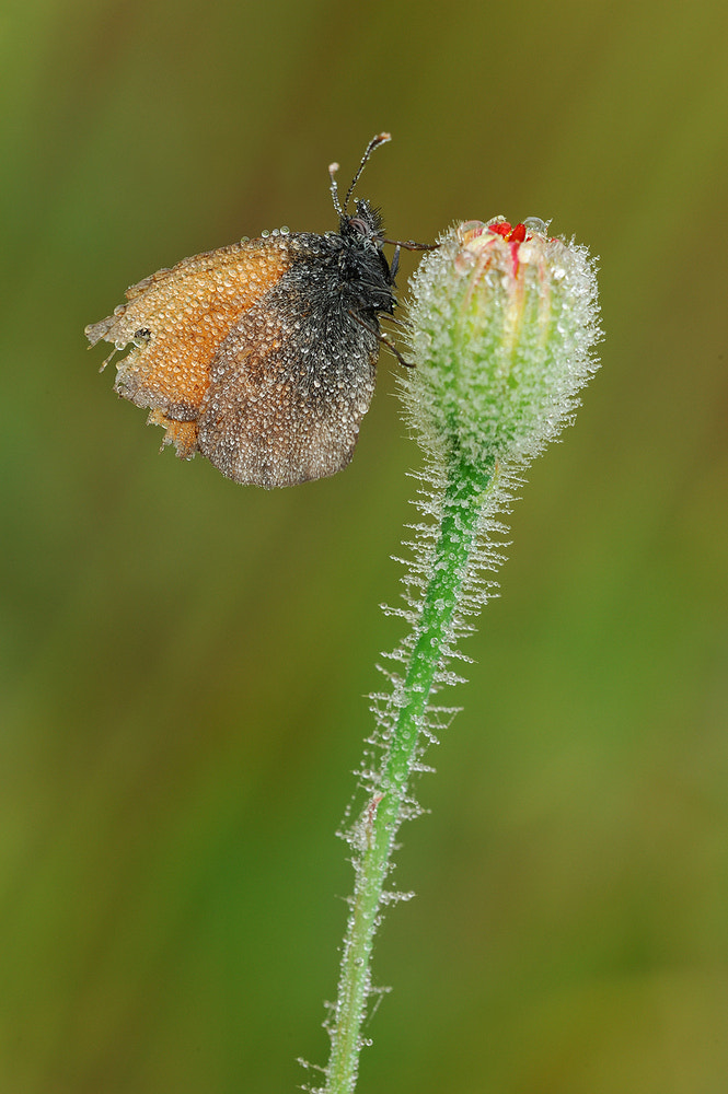 Photograph small butterfly by Luigi Chiriacò on 500px