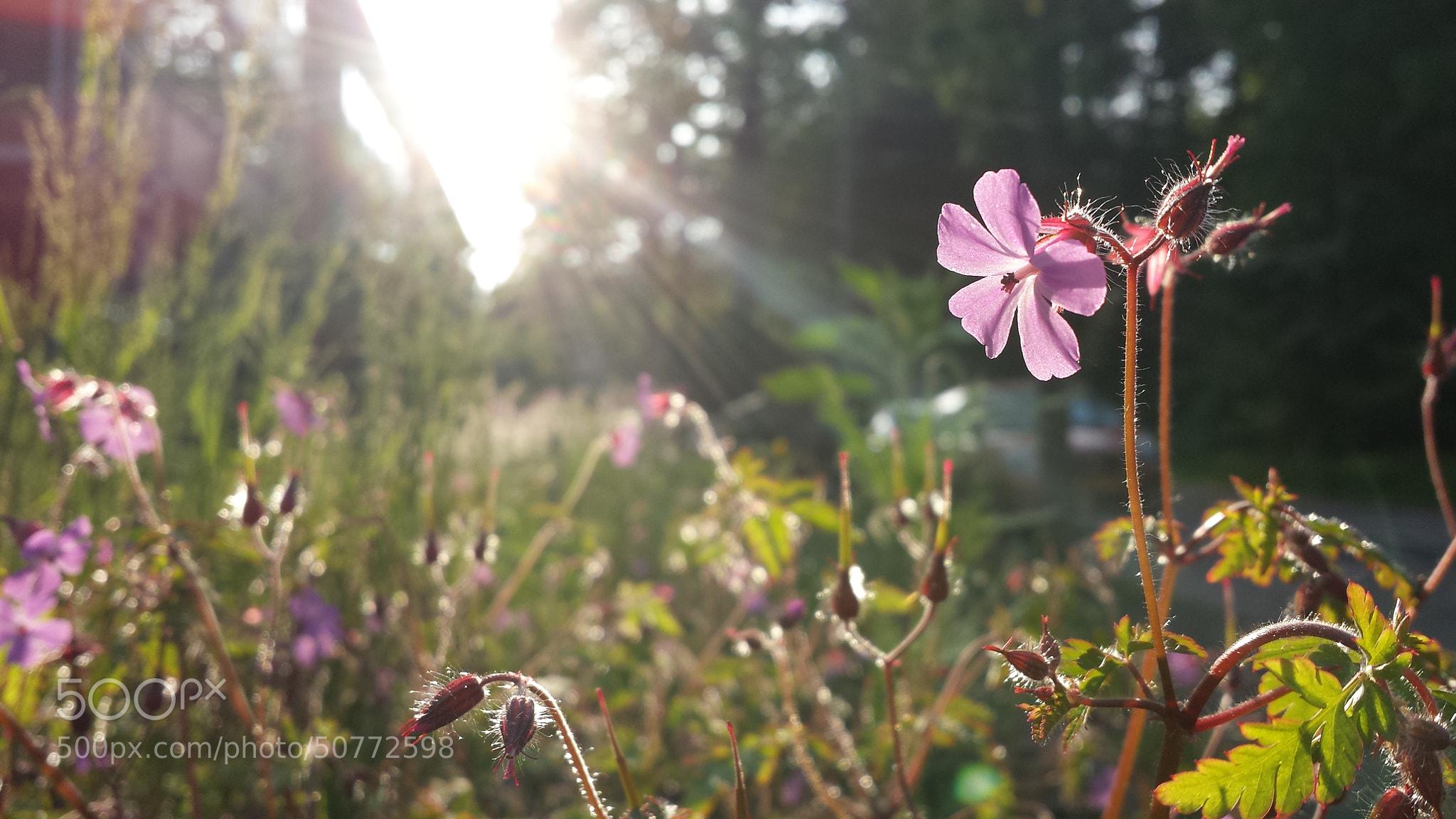 Photograph Lovely Flower by Tashina van Zwam on 500px