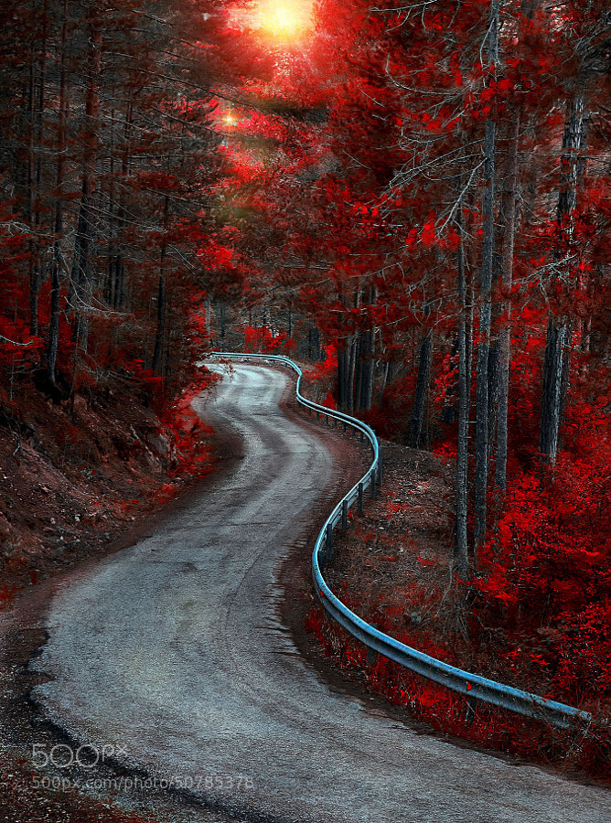 Photograph Red Forest by Alfonso Novillo on 500px