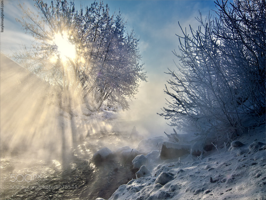 Photograph Winter sun by Elena Petrova on 500px