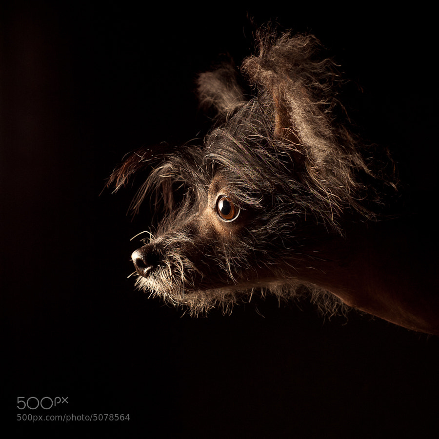 Photograph Miss Smith by Tomer Jacobson on 500px