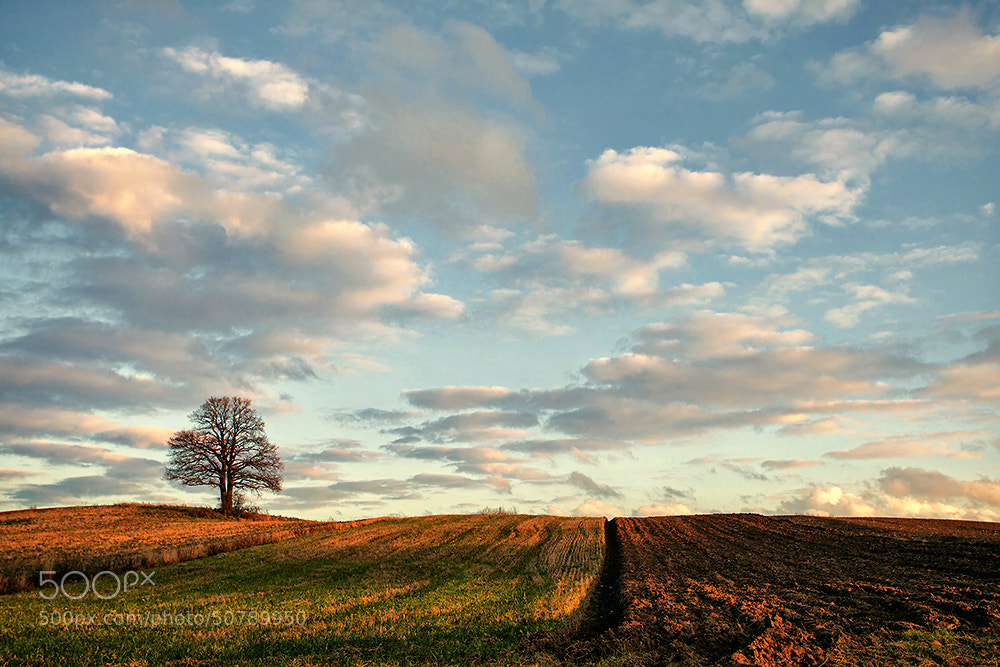 Photograph one day in October by Dgs  on 500px