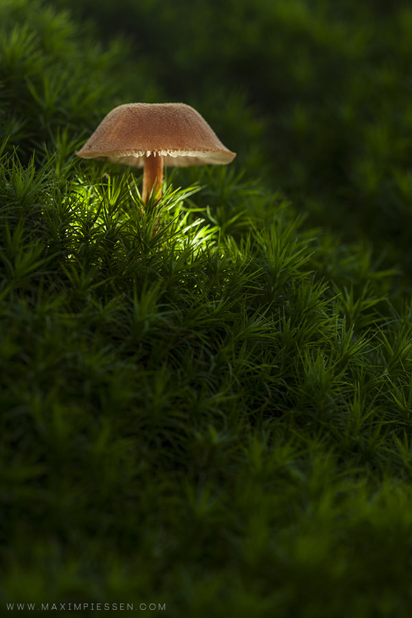 Photograph I'm a lamp by Maxim Piessen--mpke-- on 500px