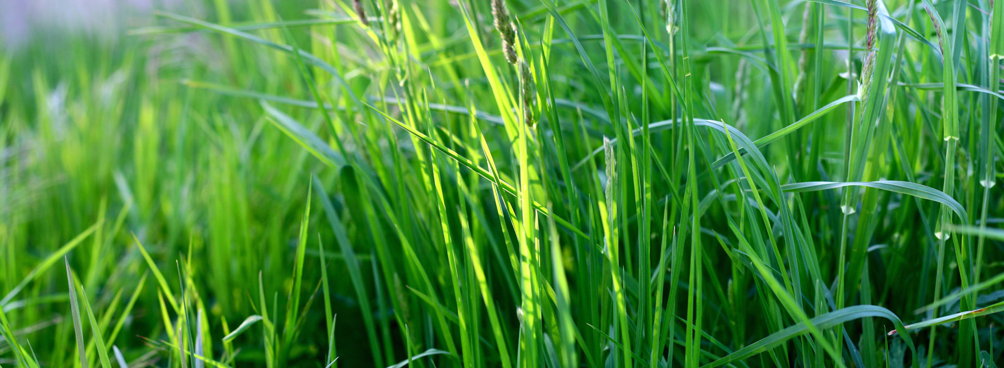 Photograph Grass by landro on 500px