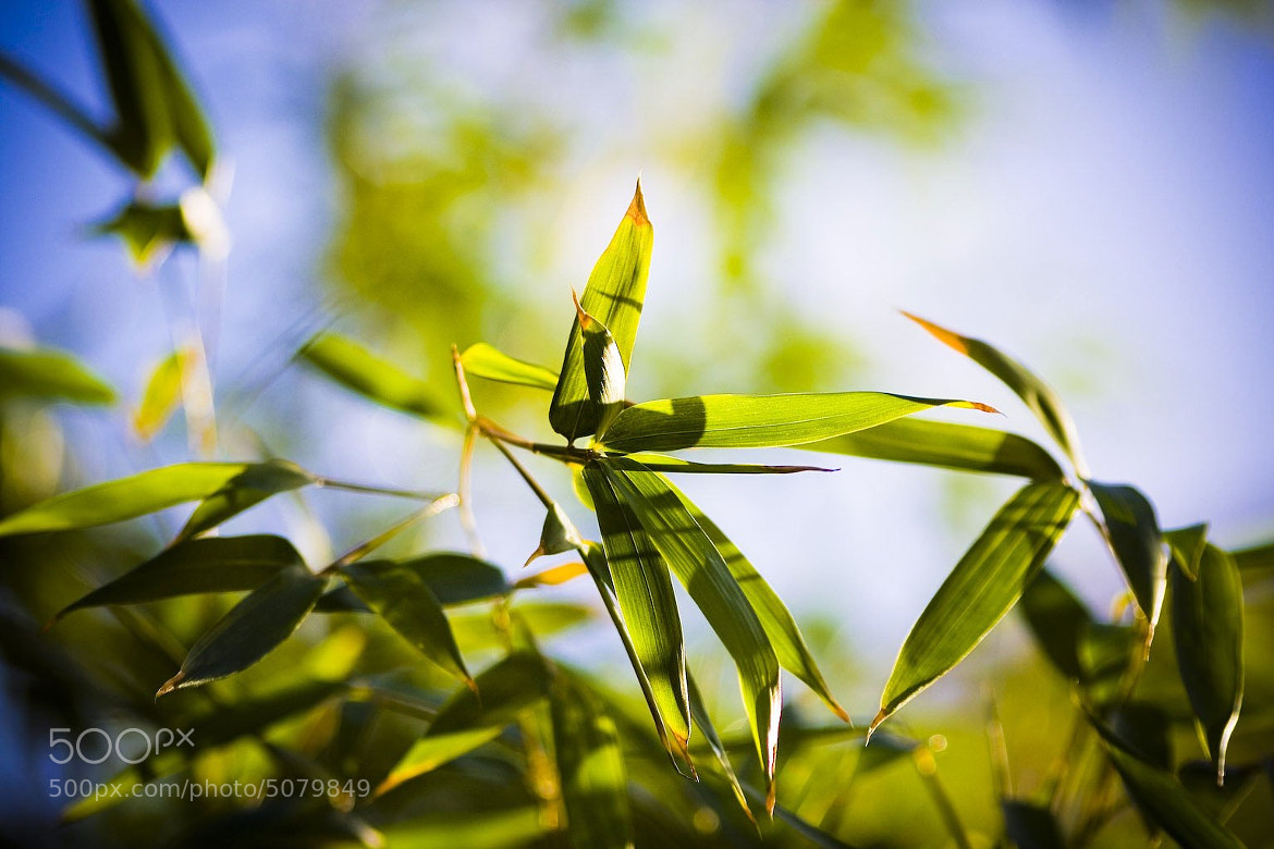 Photograph Bamboo by landro on 500px