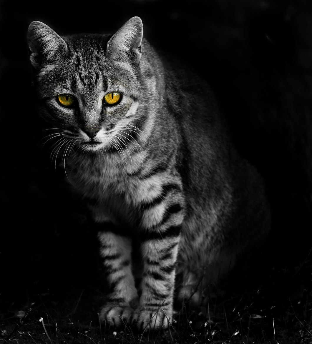 Photograph prrrr... look me in the eye. by carolina madruga on 500px