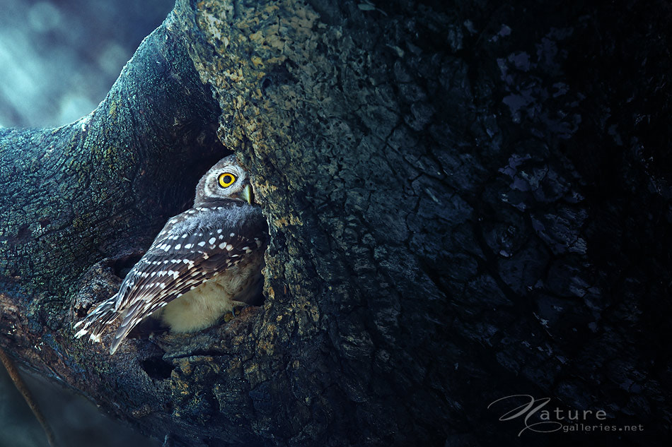 Photograph one eye by Sasi - smit on 500px