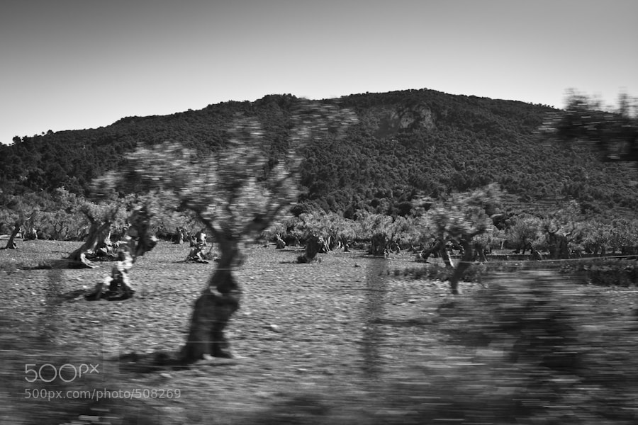 Photograph passing by by helenaf on 500px