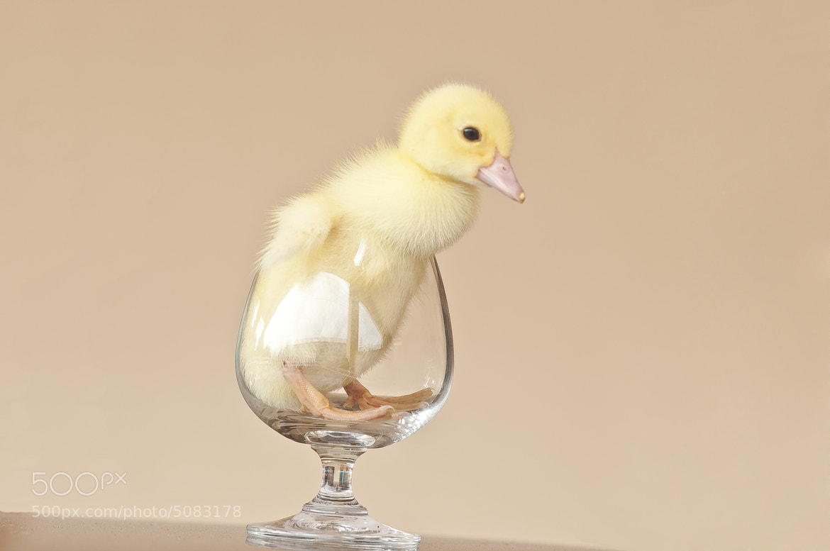 Photograph Little duck by Lyne Leon on 500px