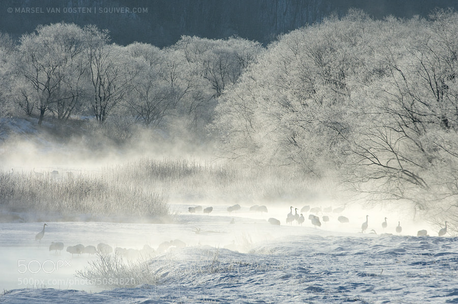 Photograph Let There Be White by Marsel van Oosten on 500px