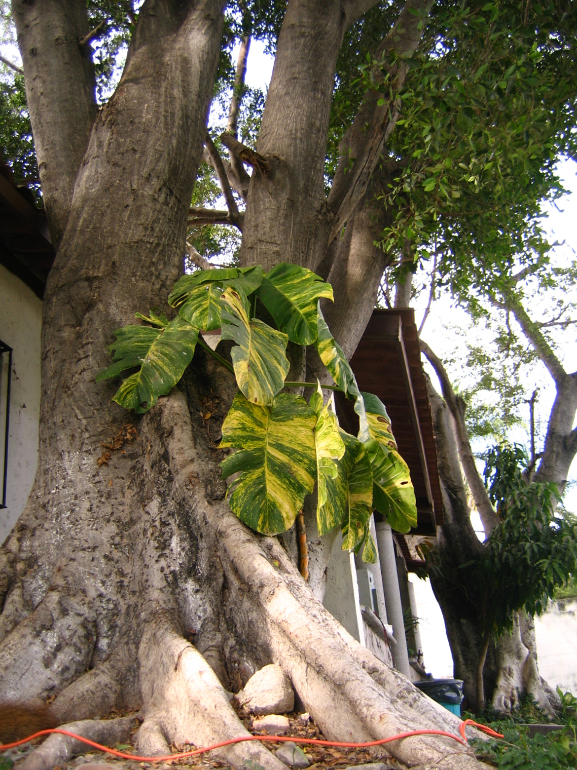 Photograph Plant growing in tree in Tequesquitengo by Ed T-Rod on 500px