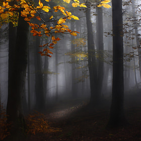 Misty forest by Kristjan Rems (KristjanRems)) on 500px.com