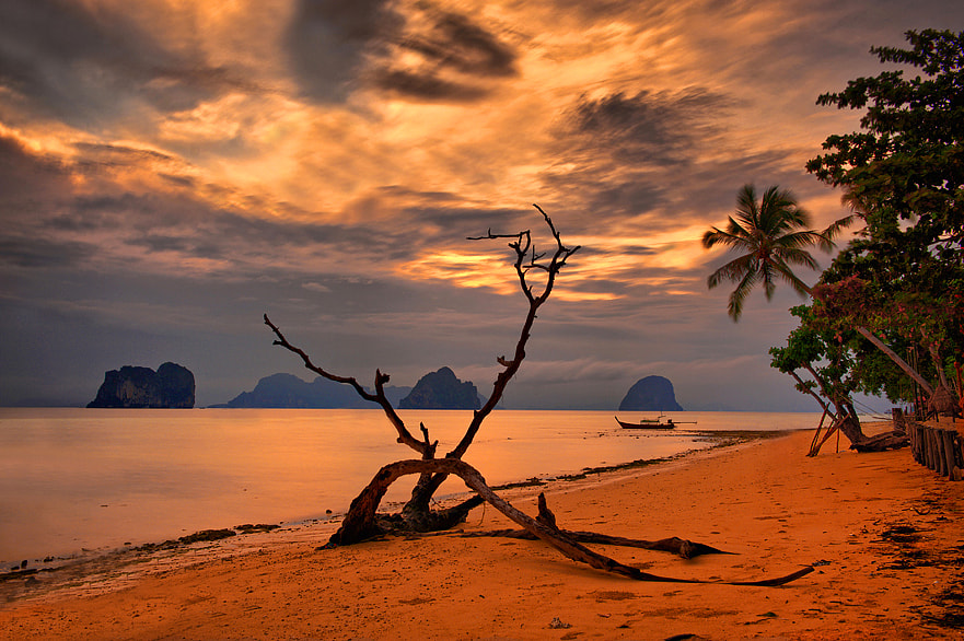 Photograph Branches of Koh Ngai by Aubrey Stoll on 500px
