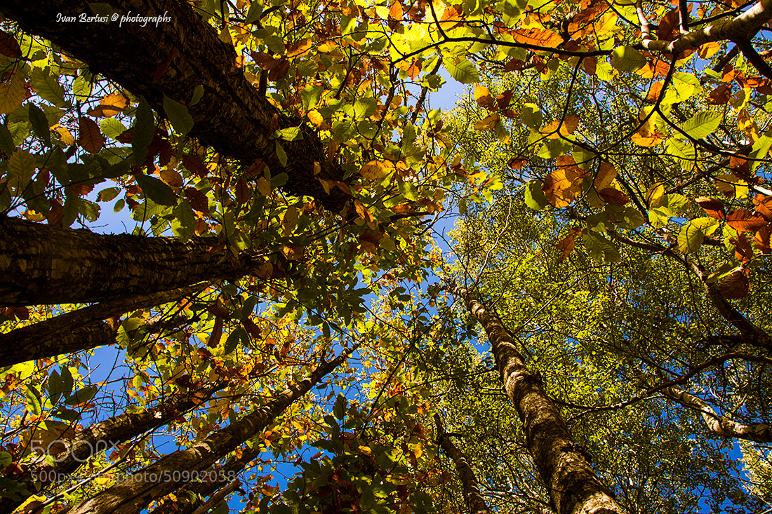 Photograph Autunno by Ivan Bertusi on 500px